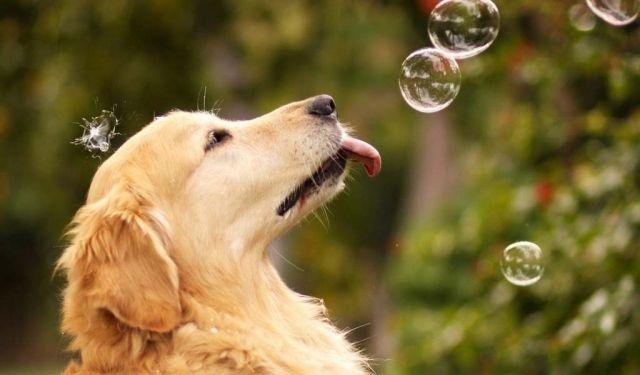 6 советов по съемке животных: креативно, искренне, интересно
