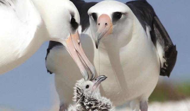 16 фотографий птиц, которые души не чают в своих детенышах