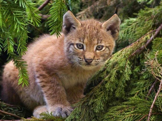 Маленькие обитатели леса – Коллекция картинок