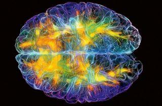 Интересные статьи по нейропсихологии из интернета