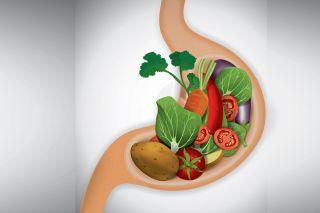 Здоровье и пищеварение