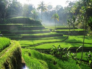 Сказочные пейзажи: рисовые террасы на Бали
