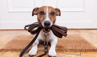 Услуги специалиста по качественной стрижке собак