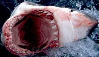 Как вести себя при встрече с акулой: инструкции по выживанию
