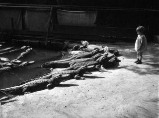 Случай в зоопарке Нью-Йорка