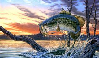 Есть ли рыбалка в Ивановской области на реке Сунжа?