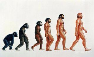 Факты об эволюции человека. Взгляни на человека по-новому