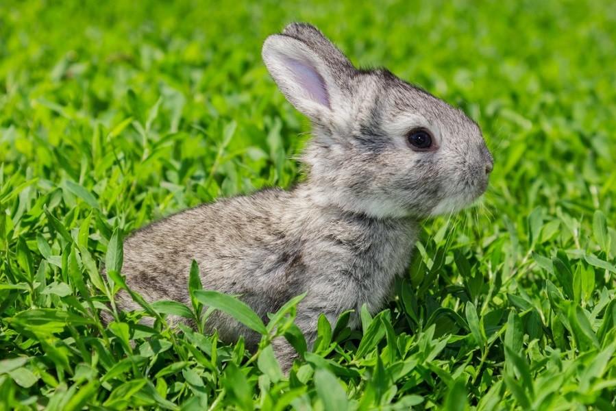Купим кролика небольшого размера