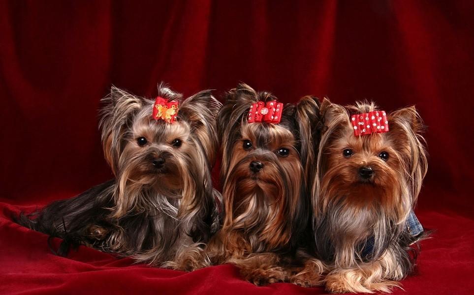 фото мелких пород собак и названия крыжовника обязательная